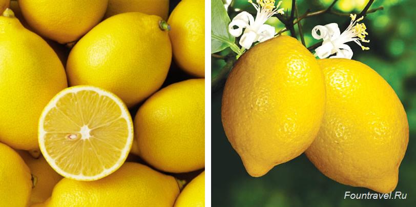 Лимон и его полезные свойства