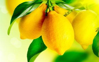 Чем полезны лимоны для организма человека