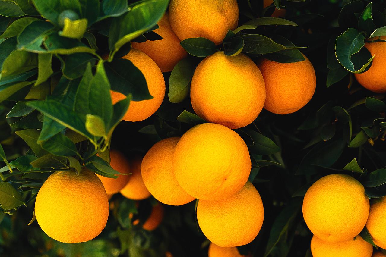 Вред и польза апельсинов