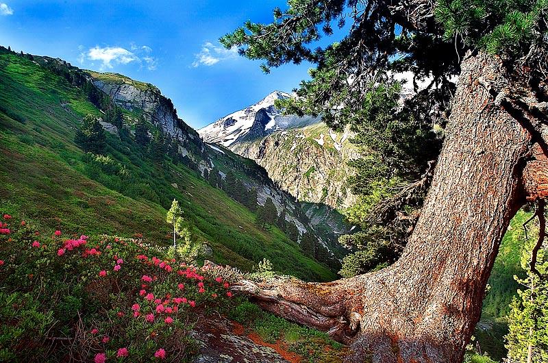 Заповедник Высокий Тауэрн, Тироль, Австрия