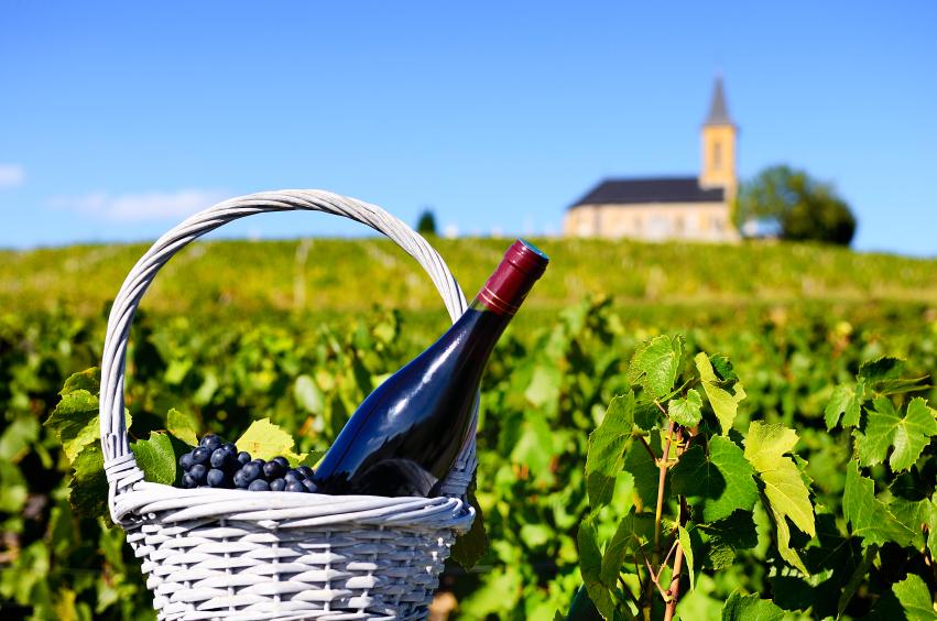 Виноградники региона Божоле во Франции