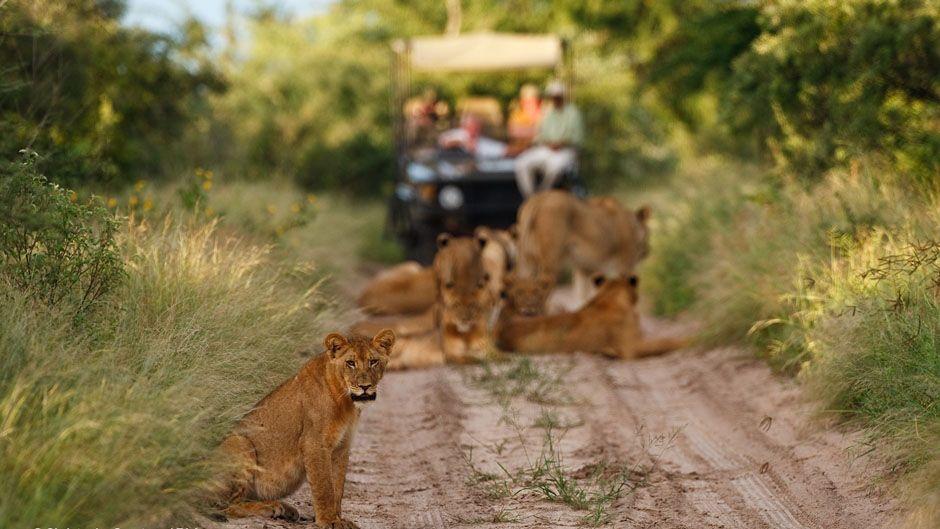 Сафари в парке Сентрал-Калахари, Ботсвана, Южная Африка