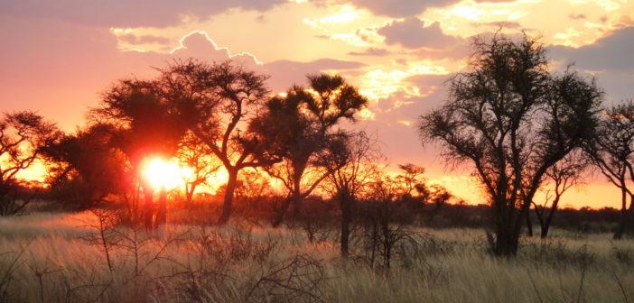 Сентрал-Калахари, Ботсвана: экскурсии, флора и фауна, отели