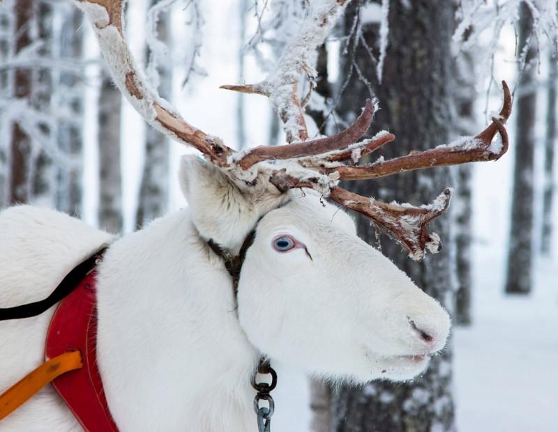 Лапландия, Финляндия - отели, экскурсии, отдых