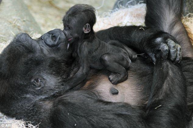 Куда сходить с детьми в Праге - Пражский зоопарк