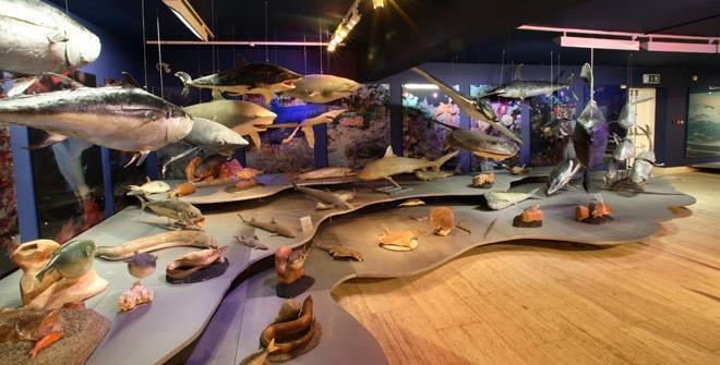 Интересные места - музей Таласса в Айя-Напе