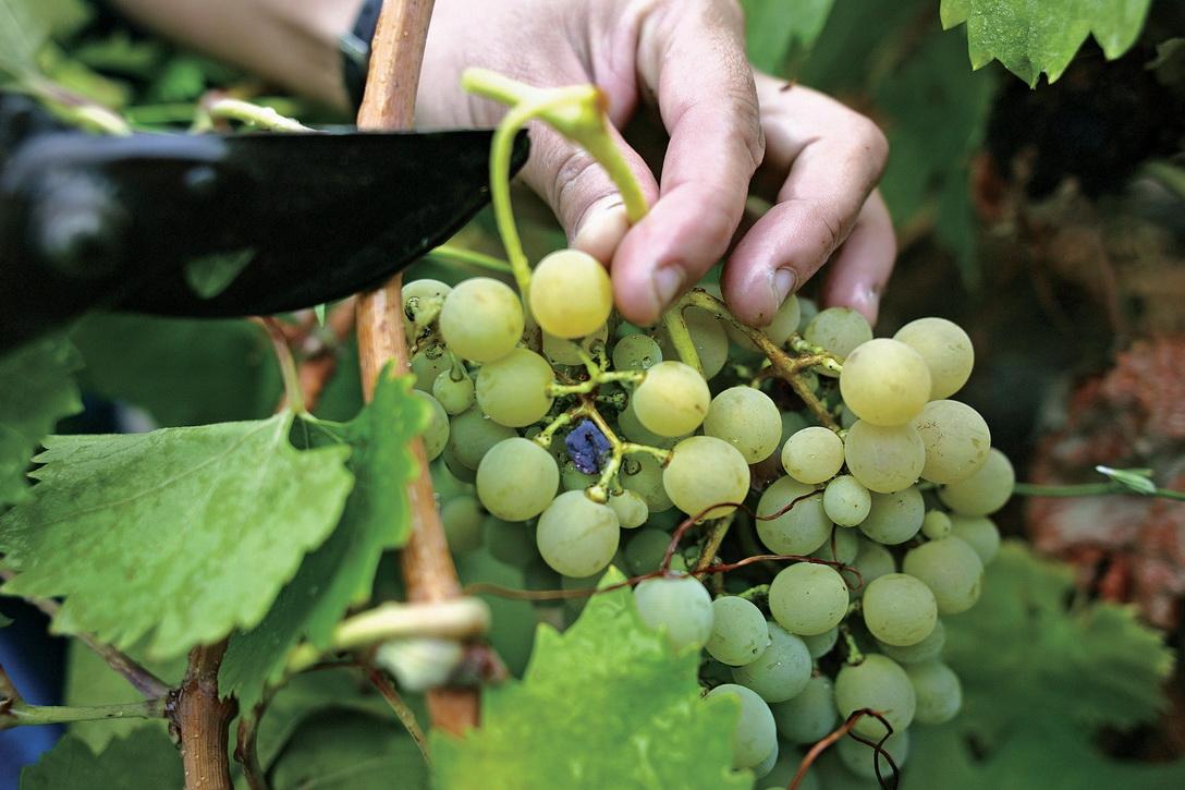 Винодельня Порто Каррас, Халкидики, Греция
