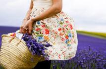 Фестиваль лаванды, Прованс — время цветения, когда ехать, где остановиться