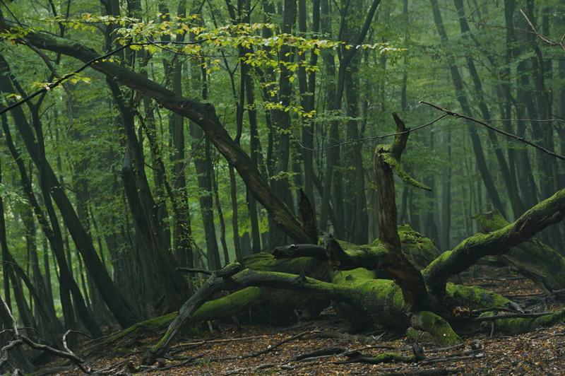 Куда можно съездить из Вены - Венский лес
