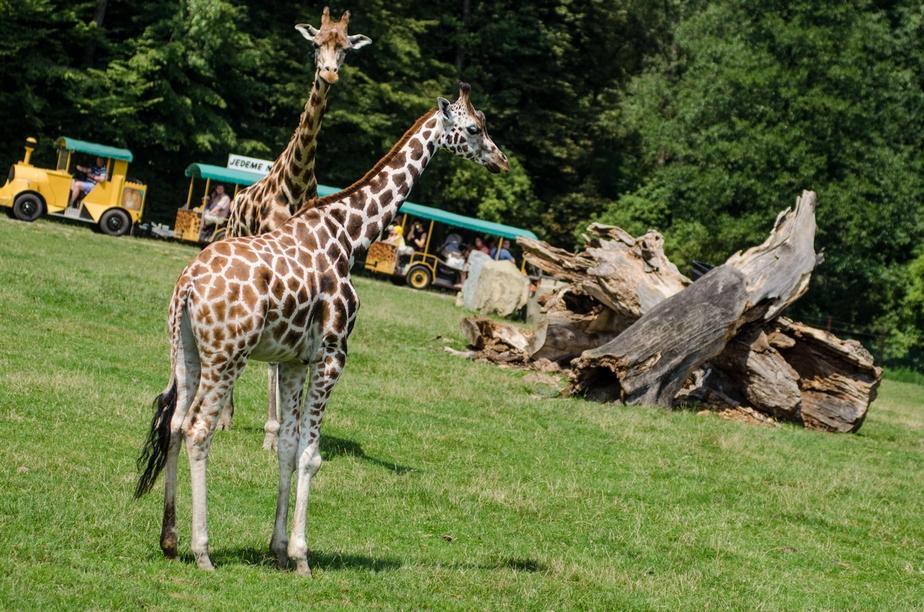 Интересные места Остравы: зоопарк