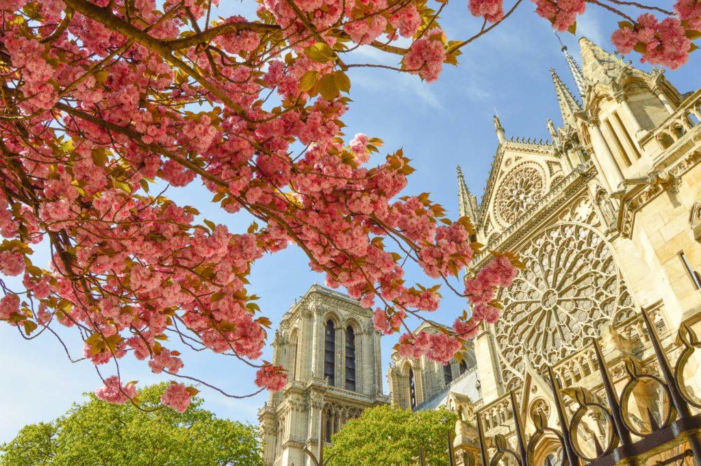 Цветущие деревья весной в Париже