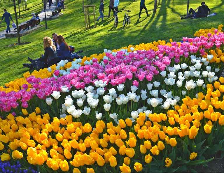 Фестиваль тюльпанов в Стамбуле: даты цветения, экскурсии
