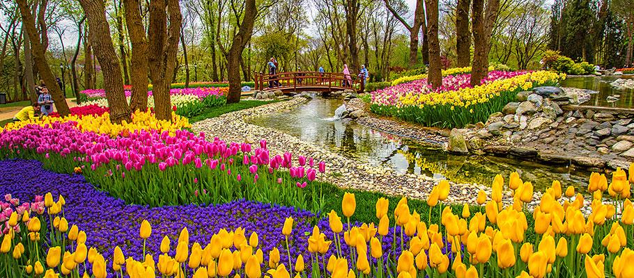 Фестиваль тюльпанов в парке Эмирган, Стамбул