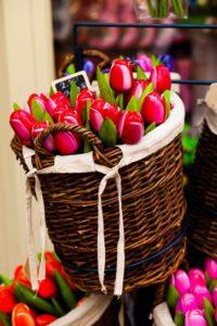 Когда начинается цветение тюльпанов в Стамбуле