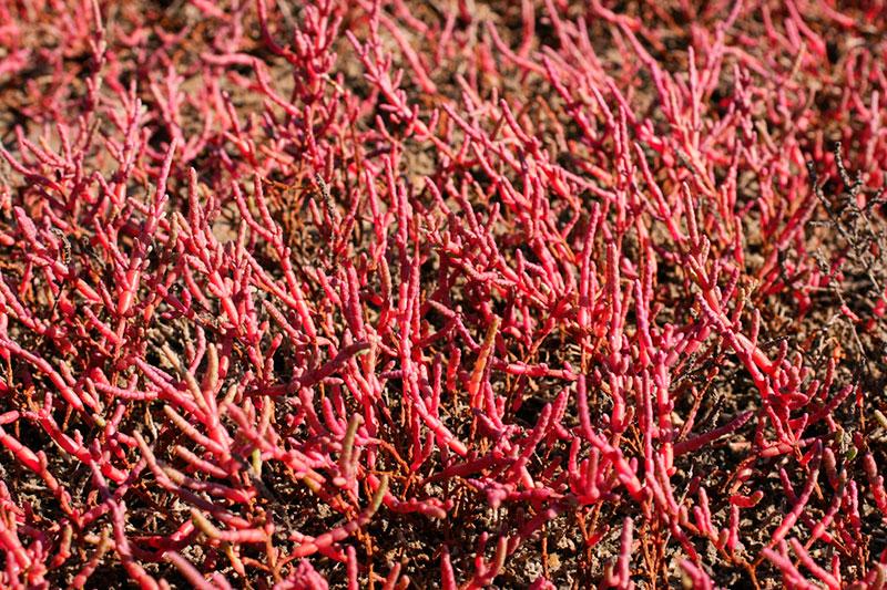 Кояшское озеро (Керчь, Крым): когда становится розовым, когда цветут водоросли