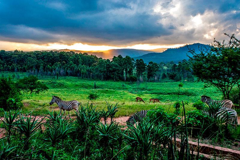 Королевства мира: Свазиленд
