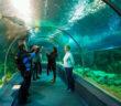 Сочинский океанариум (Sochi Discovery World Aquarium): цены, как добраться, отзывы