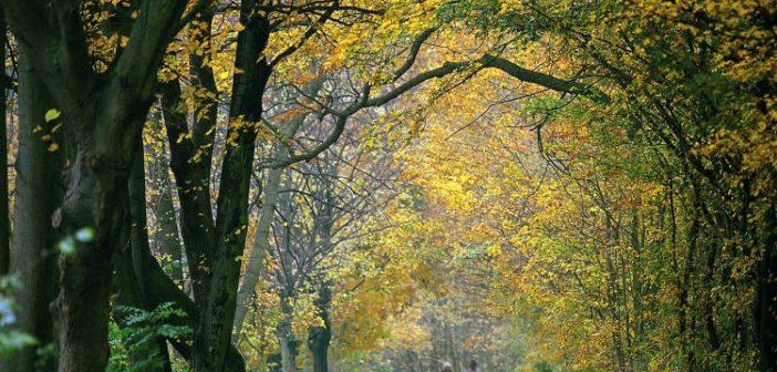 Венский лес (Вена, Австрия) — экскурсии, как добраться, что посмотреть
