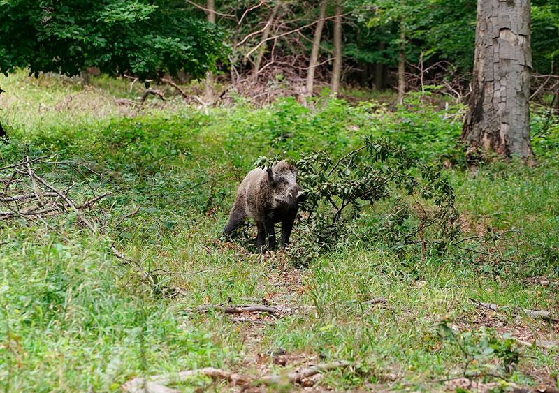 Венский лес: что посмотреть и как доехать