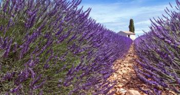 Плато Валенсоль: как добраться до лавандовых полей