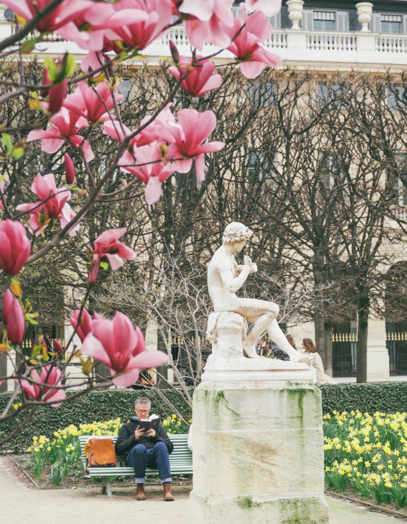 Где цветут самые красивые вишни в Париже? В Малом дворце!
