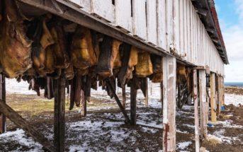 Мясо Хаукарль — исландский деликатес «с душком»