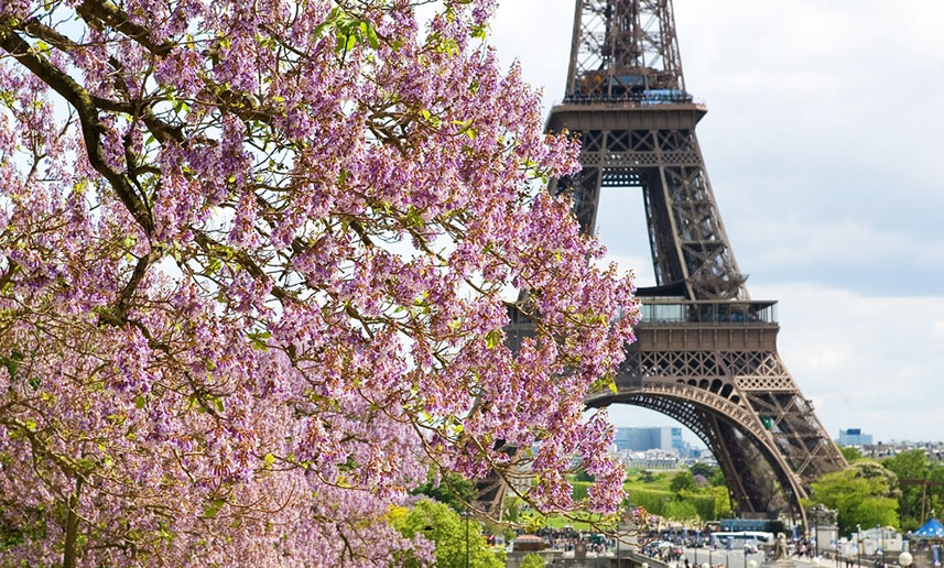Весна в Париже: цветущие деревья в районе Эйфелевой башни