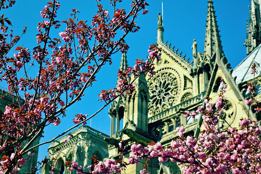 Даты цветения вишни и магнолий в Париже