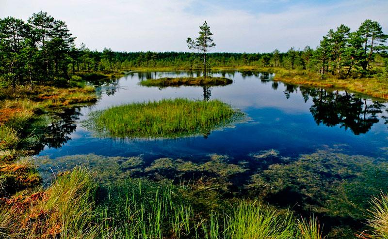 Экскурсии из Таллина: национальный парк Лахемаа