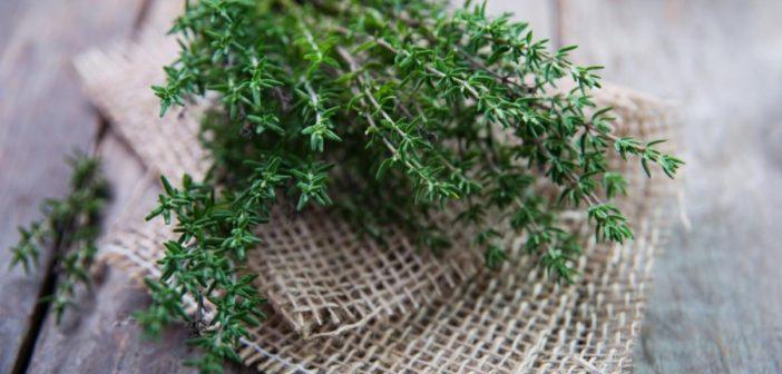 Джем из тимьяна от кашля (фото, ингредиенты, рецепт)