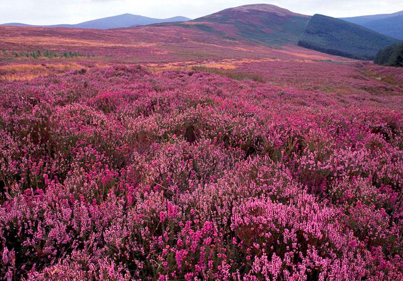Национальный парк Уиклоу Маунтинс, Ирландия