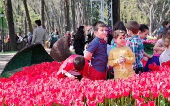 Парк Эмирган в Стамбуле — где находится / как добраться