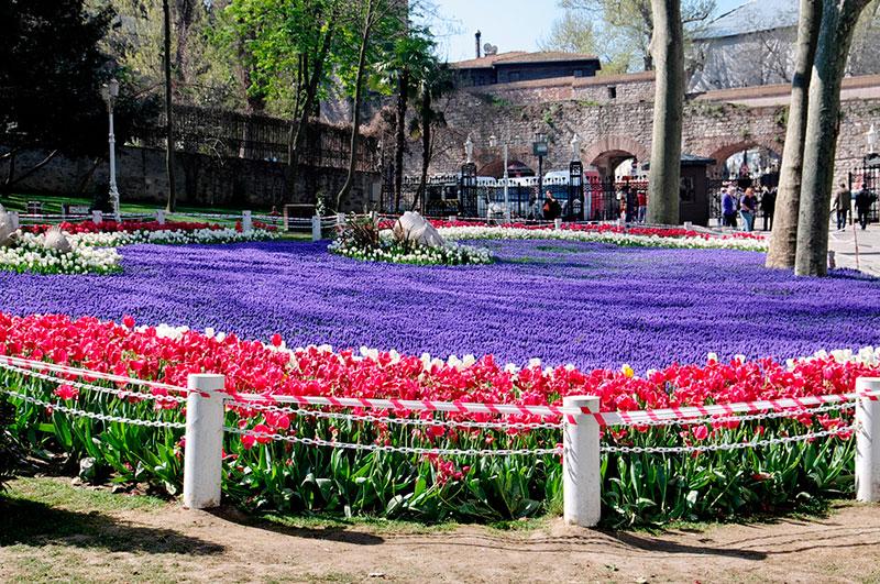 Тюльпаны в парке Гюльхане, Стамбул