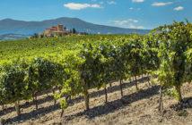 Лучшие французские вина: регион Бордо Французские вина Французские вина frantsuzskie vina 8 214x140