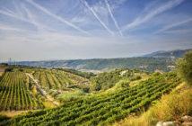 Лучшие винодельни Прованса: Белле (Bellet) прованс вино Винодельни Прованса: лучшие красные, белые и розовые вина luchshie vina provansa bellet 2 214x140