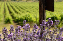 Лучшие винодельни Прованса: Белле (Bellet) прованс вино Винодельни Прованса: лучшие красные, белые и розовые вина luchshie vina provansa bellet 5 214x140