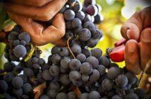 Лучшие винодельни Прованса: Белле (Bellet) прованс вино Винодельни Прованса: лучшие красные, белые и розовые вина luchshie vina provansa bellet 6 214x140