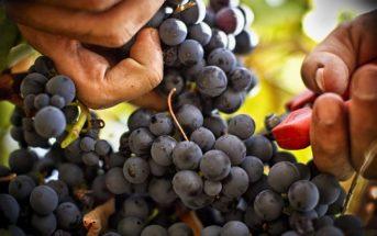Лучшие винодельни Прованса: Белле (Bellet)