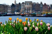 Едем в Амстердам в апреле