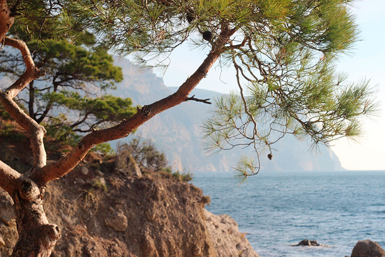 Пляжи Балаклавы: Инжир